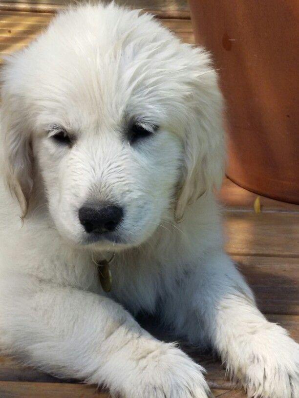 Pinterest Daytonmcc Cute Animals Dogs And Puppies