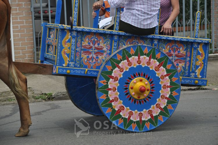 Costa Rica Ox Cart Tradition History Osa Property Management Ox Traditional Costa Rica
