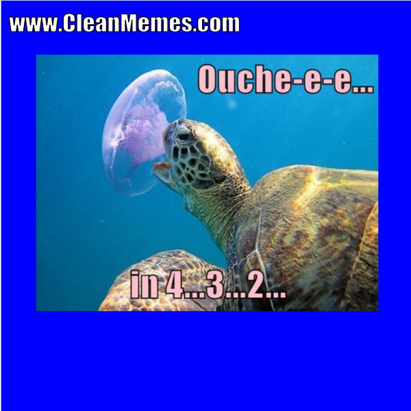 Http Www Cleanmemes Com Funny Animal Memes Clean Memes Funny Memes