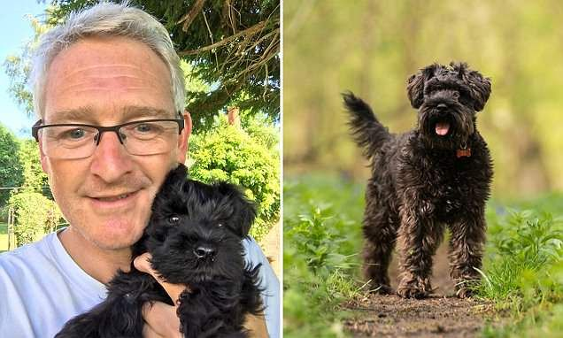 Dog lover's schnauzer STOLEN by Amazon driver making a