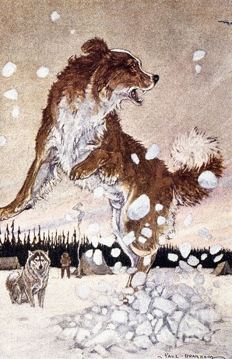 Call Of The Wild By Granger Call Of The Wild Wild Book Art