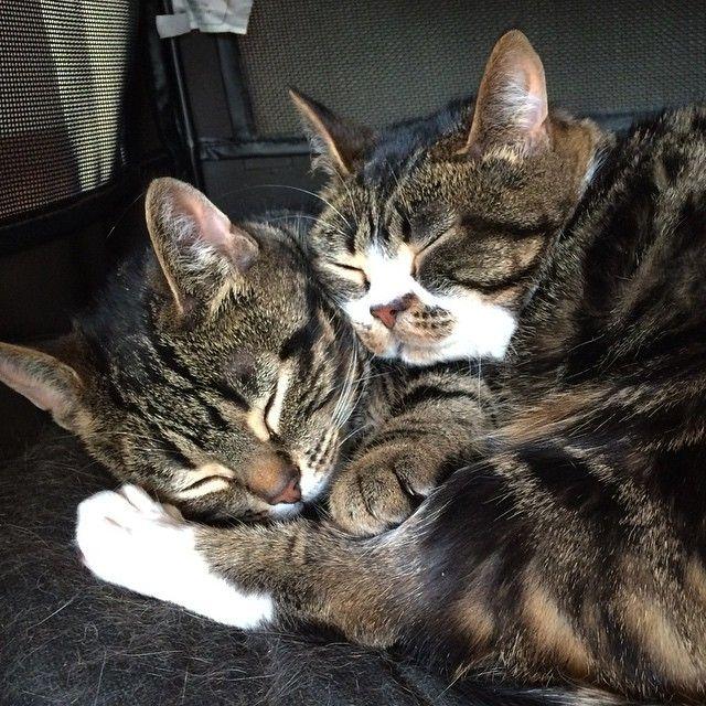 Cats   Elfie and Gimli, snuggle bugs