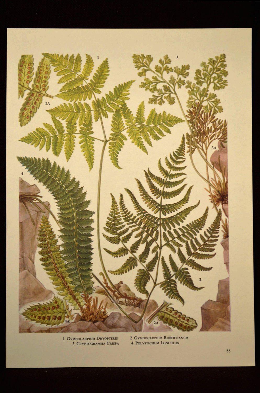 Fern Wall Decor Fern Print Plant Print Wall Art Nature Print ...