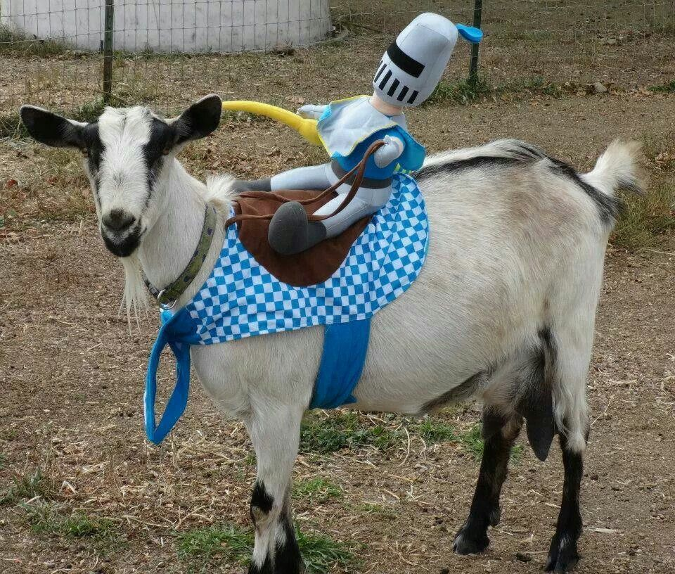 Goat Costume Animal Costumes Goats Goat Yoga