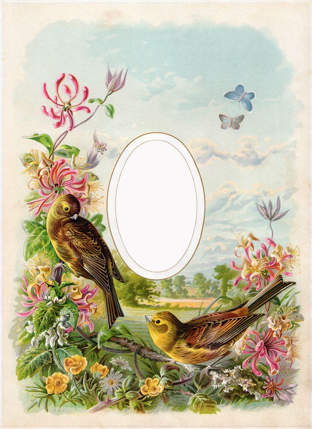 Cathe-Holden-Bird-Album-02 | My fav Vin | Pinterest | Bird, Album ...