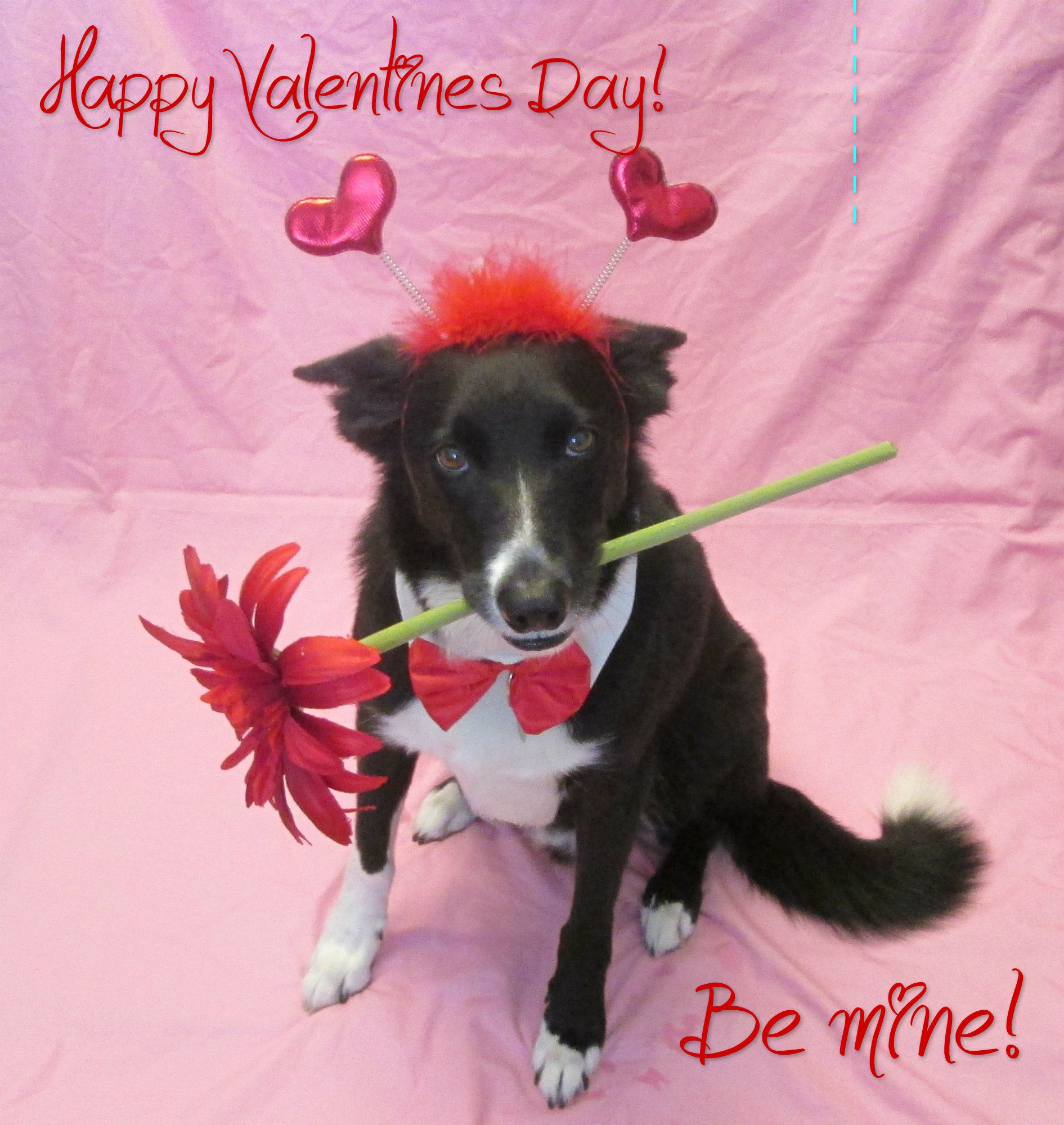 Valentines Kisses To All My Pinterest Friends Kittens Cutest Best Dog Breeds Cute Puppies
