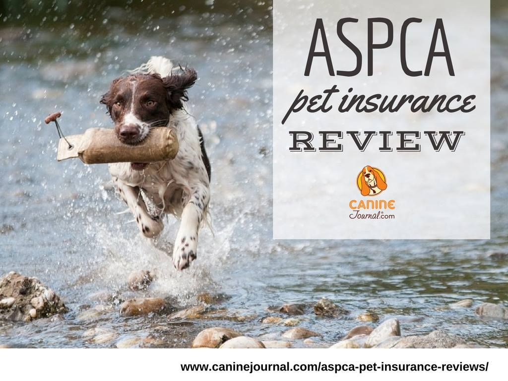 Aspca Hartville Pet Insurance Review When A Name Is Just A Name Pet Insurance Reviews Pet Care Cats Pet Insurance Cost