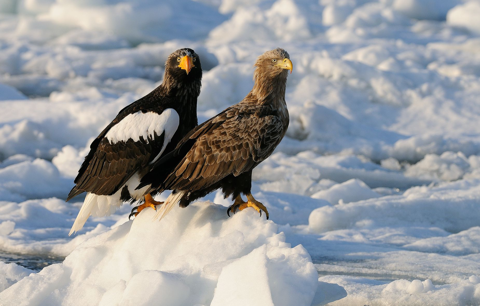 Posing by Harry  Eggens on 500px