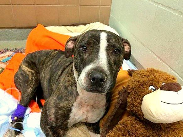 Cabela is doing amazingly well, and has been showered with gifts and love.