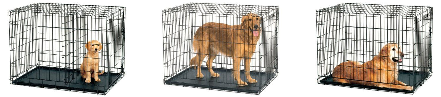 Amazon Midwest Life Stages Single Door Folding Metal Dog Crate