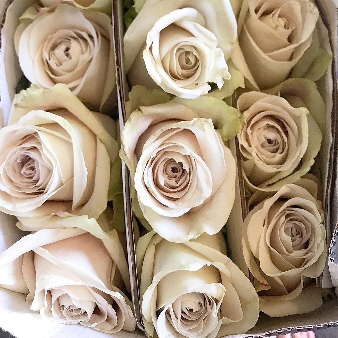 Sandy Roses A Beige Taupe Colored Rose Grass Wedding Blush Roses Rose Varieties