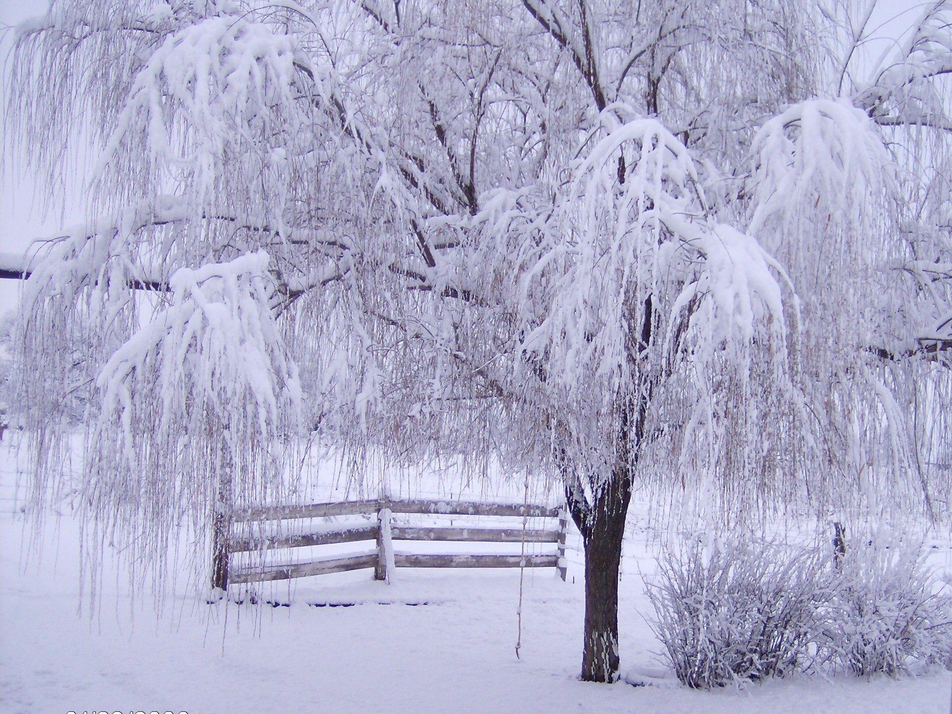 Google Image Result for http://www.fwallpaper.net/pics/nature/winter/Winter-Ecstasy.jpg