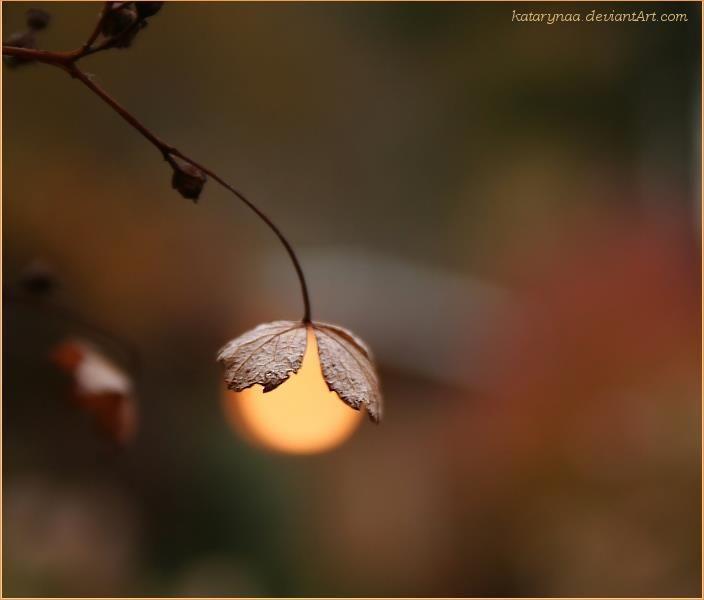 simplicity and light