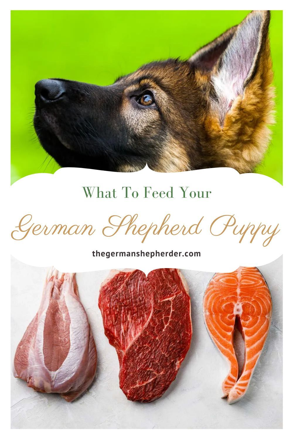 What To Feed Your German Shepherd Puppy The German Shepherder In 2020 German Shepherd Puppies German Shepherd Shepherds Diet