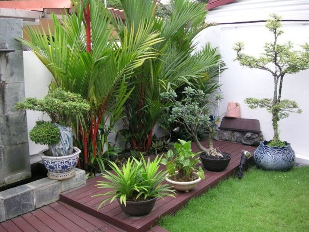 outdoor, tropical plants for small garden design with dark wooden