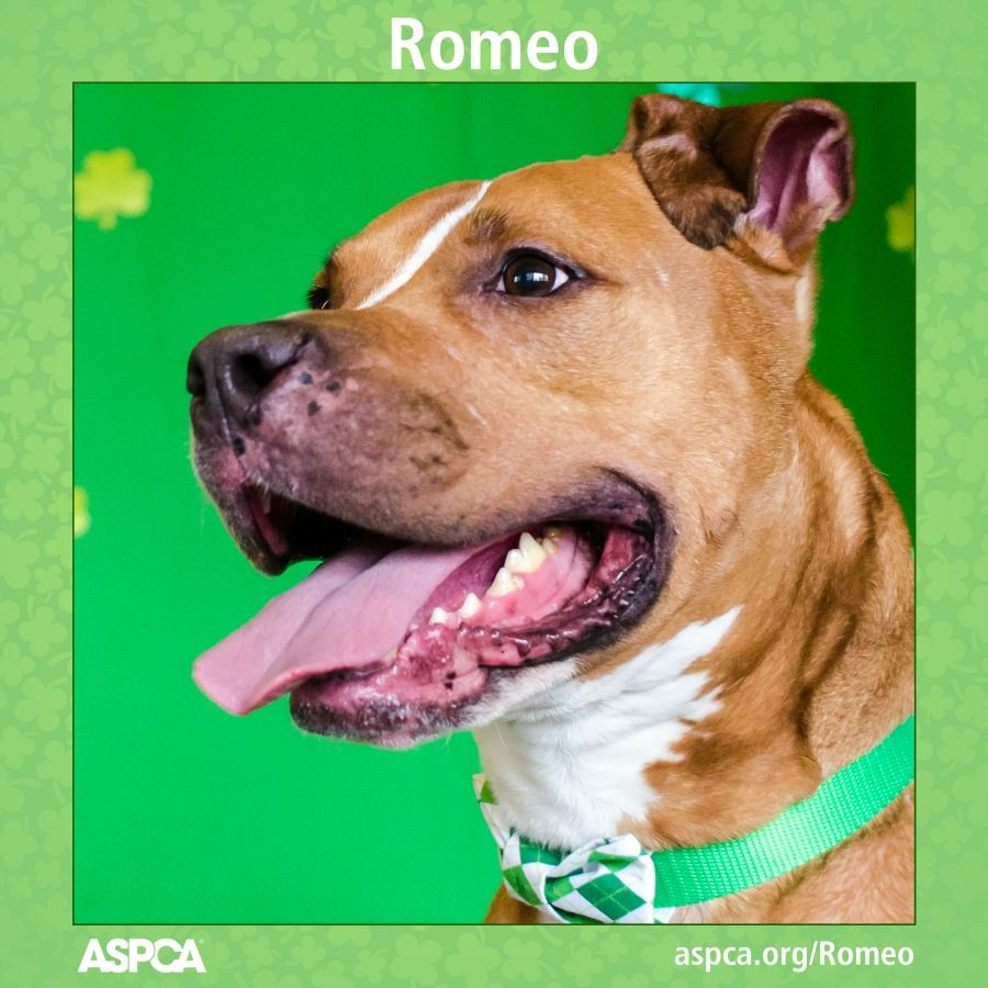 Romeo Dog Adoption Cat Adoption Dogs