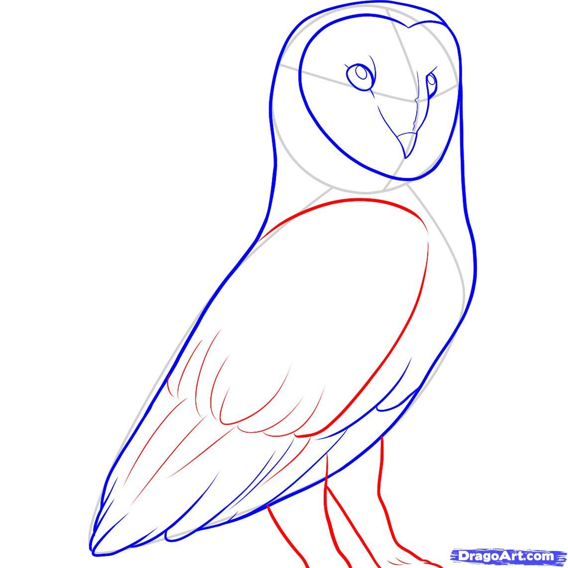 How To Draw A Barn Owl Step 10