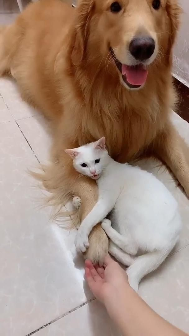 Don't touch my buddy!