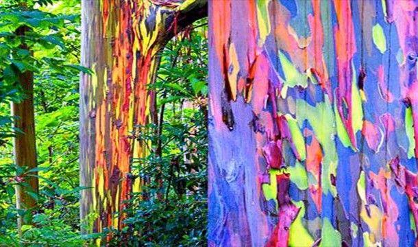Perierga Gr Parado3a Fysika Fainomena Ston Kosmo Rainbow
