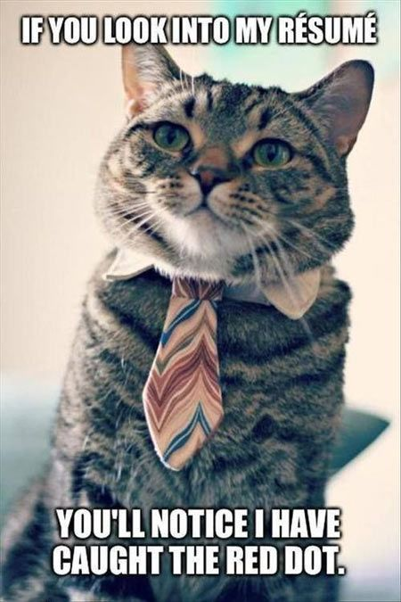 College Cat Is Looking For A Job Resume Red Dot Funny Animal Memes Silly Animals Cute Animals