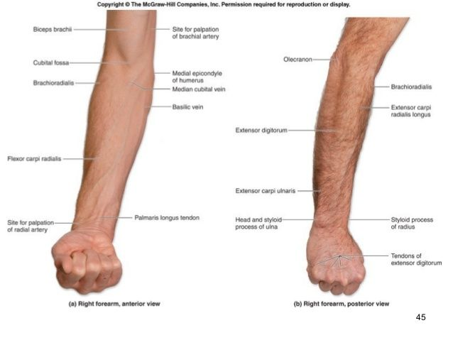 Surface Anatomy Human Anatomy Therapy Pinterest Anatomy