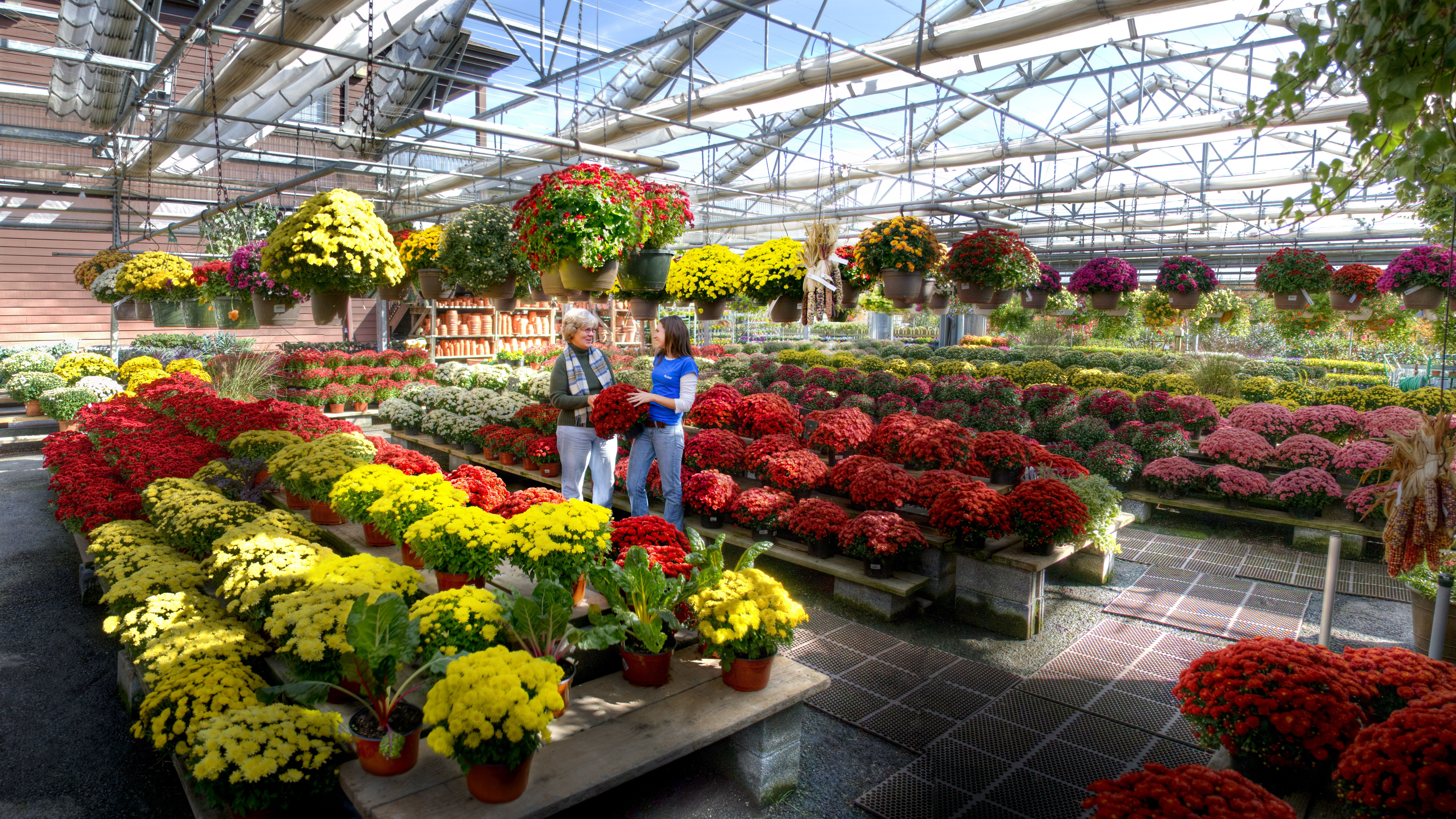 Bring The Beauty Of Fall To Your Landscape With Brightly Colored Mums Pansies Shrubs And Trees Floricultura