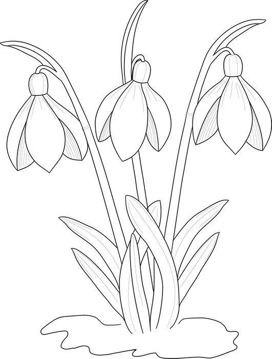 Fototapeta Winylowa Przebisniegi Rysunek Tla Flower Drawing Floral Art Design Colouring Pages