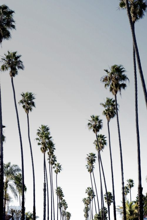 Palm Trees Tumblr Vertical