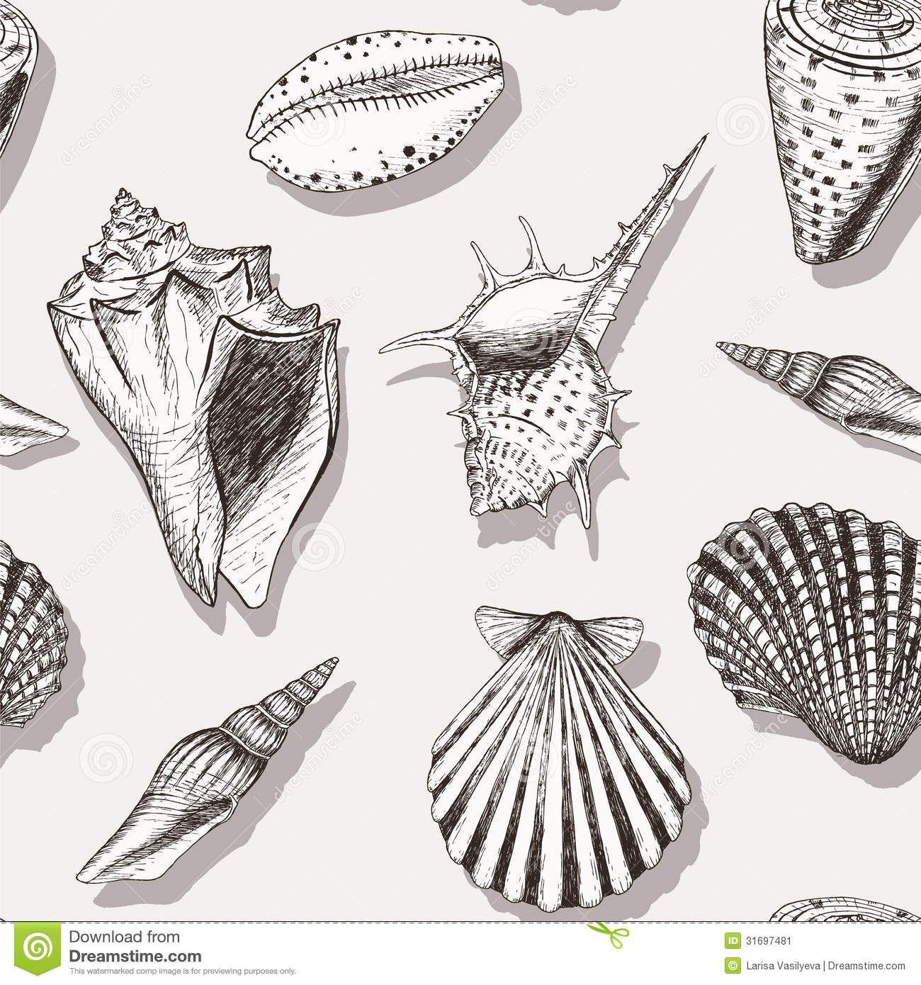 Shell Designs