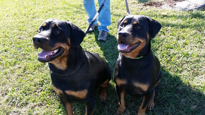 Tank & Roxanne Pets, Animals, Dogs
