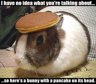 i have no idea what you're talking about...so here's a bunny with a pancake on its head!