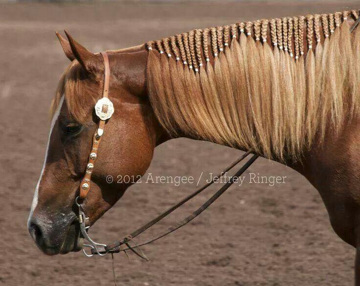Western Hair Styles: Cheval Poney, Crins De