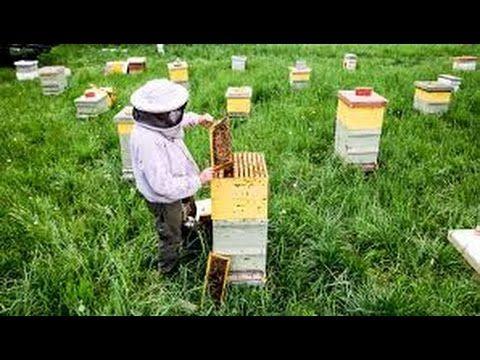 Beekeeping Basics: How to Raise Honeybees in Your Backyard ...