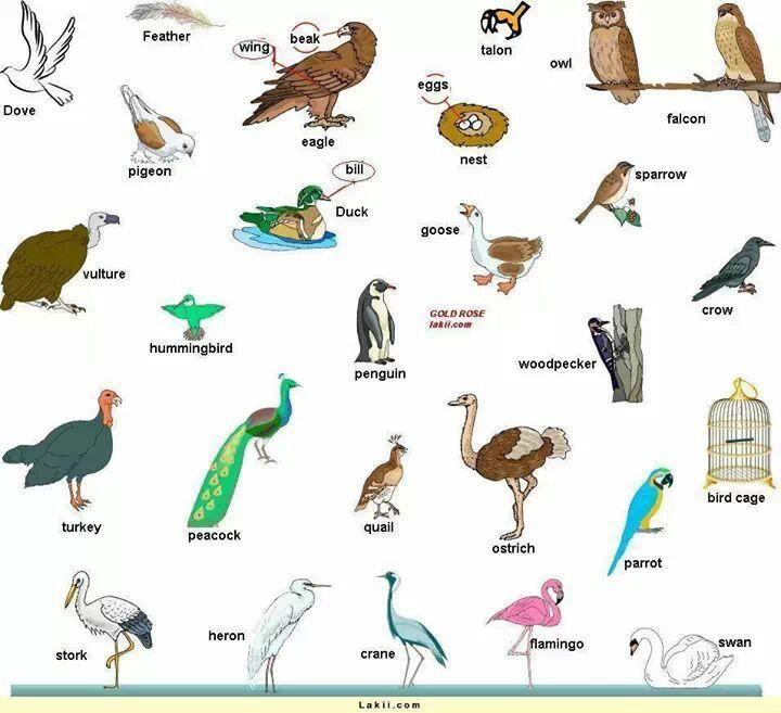 English Vocabulary Animals Birds Tarefas Do Jardim De Infancia Idioma Ingles Dicas De Ingles