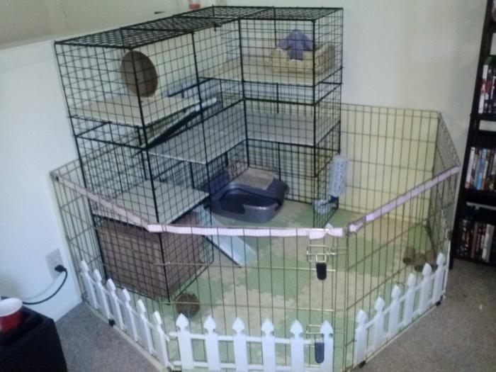 Nic Condo Distress With Images Diy Bunny Cage Diy Rabbit Cage Bunny Room