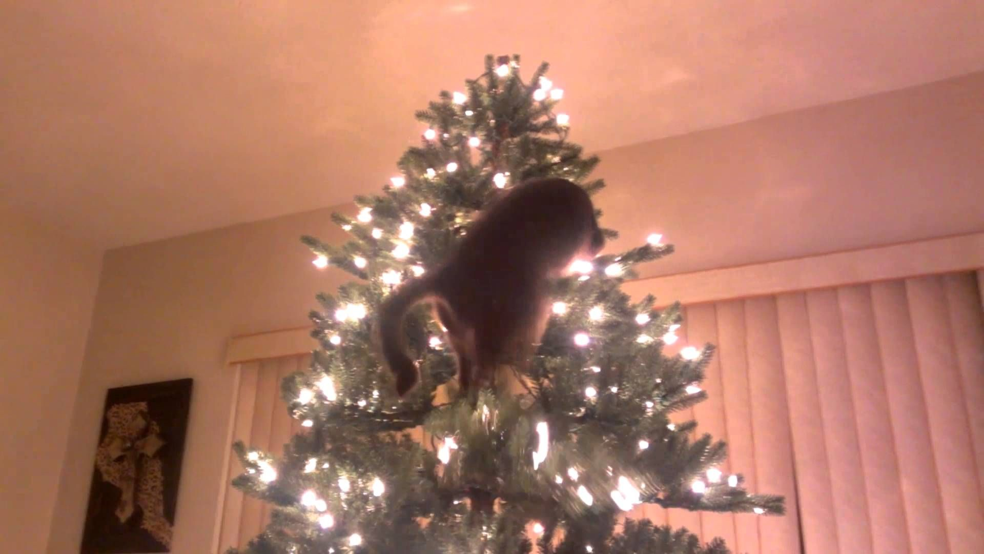 Sesshomaru the Cat Attempts to Climb the Christmas Tree