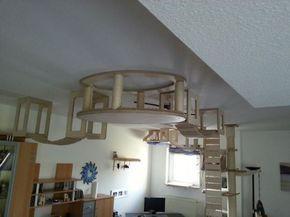 fabriquez un parcours pour votre chat au plafond pour. Black Bedroom Furniture Sets. Home Design Ideas