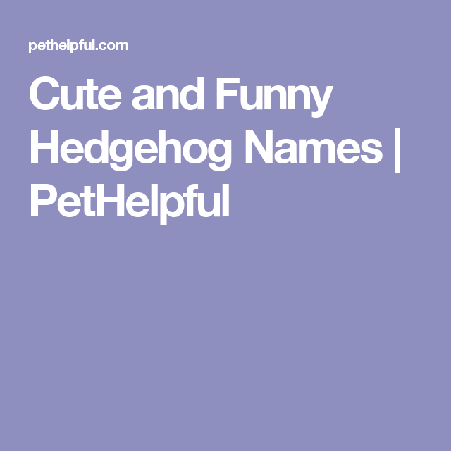 Cute And Funny Hedgehog Names From Button To Zuri Hedgehog