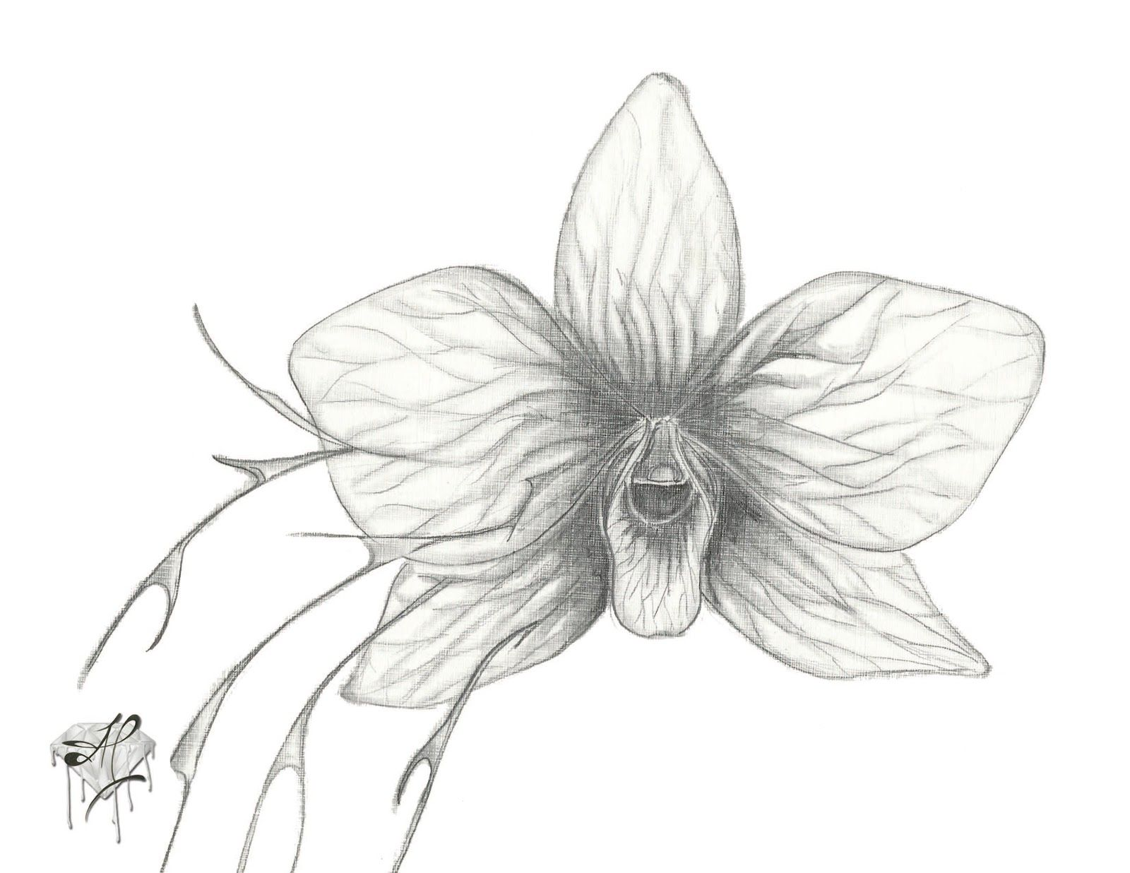 Pin by Rita Spess on Draw flowers | Pinterest | Orchids ...  Pin by Rita Spe...