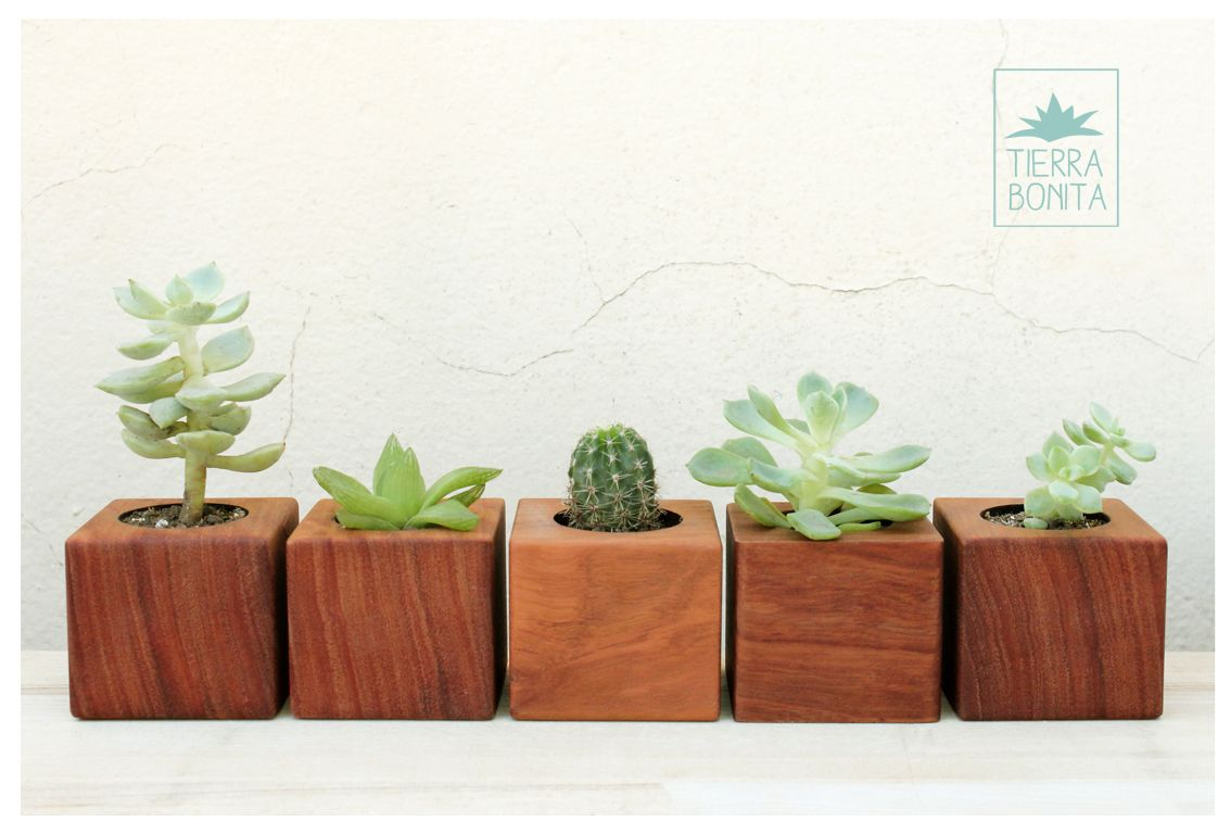 Cubos de madera maciza mini macetas para cactus y for Cactus de exterior