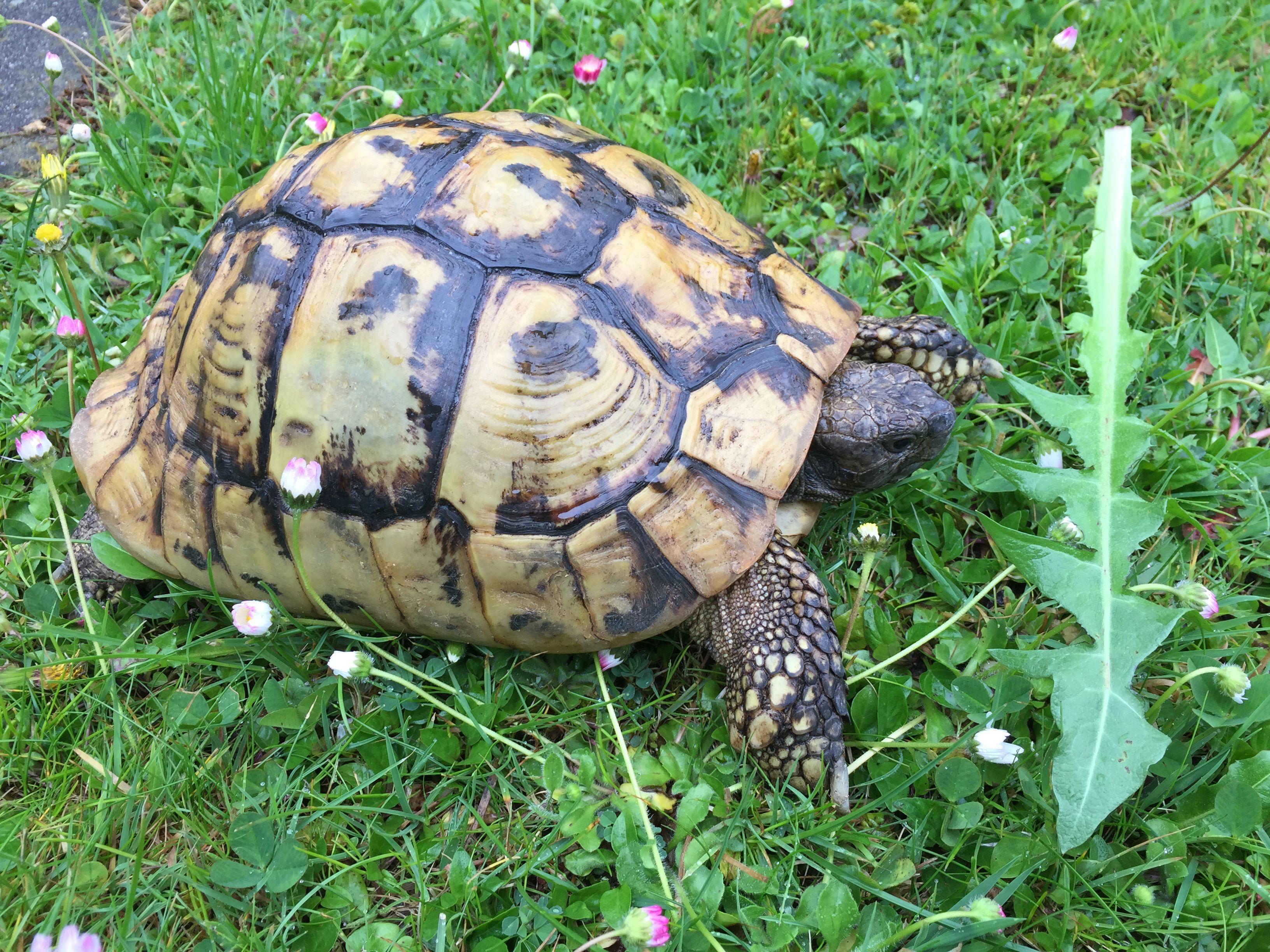 Ziemlich Süße Malvorlagen Von Schildkröten Fotos ...