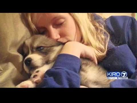 Amanda's boyfriend abused her. For years, she was terrified and alone. But 3 years ago, Amanda saw an ad for an orphaned husky puppy on Craigslist. Little di...