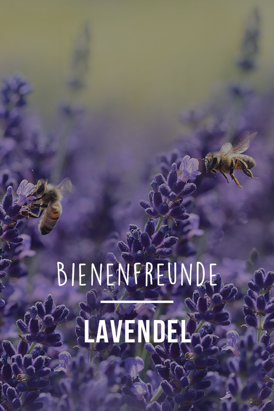 Beet Balkonpflanze Lavendel Hagebau De Gartentipps Garten
