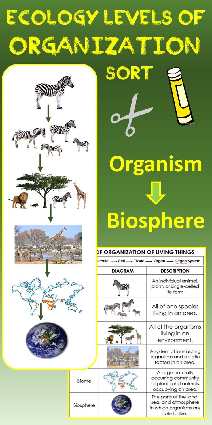43+ Levels of ecological organization worksheet answers Info