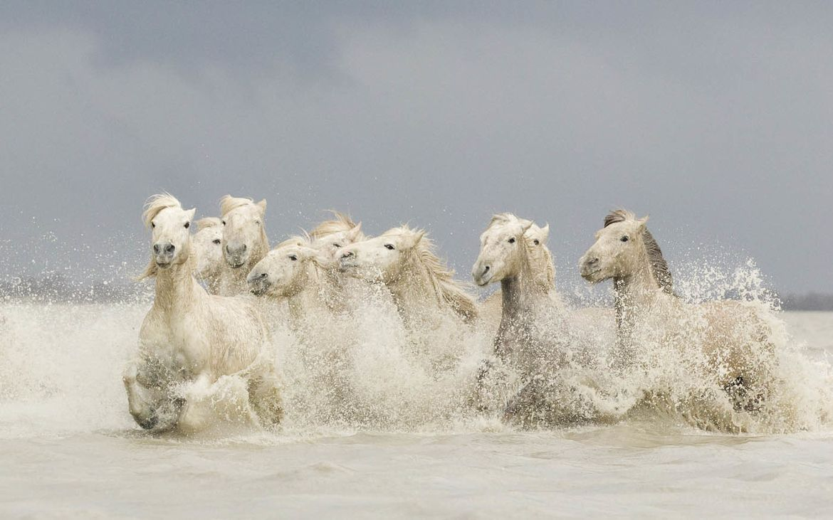 Photograph White Horses in a Rain Storm by Mick Watson on 500px