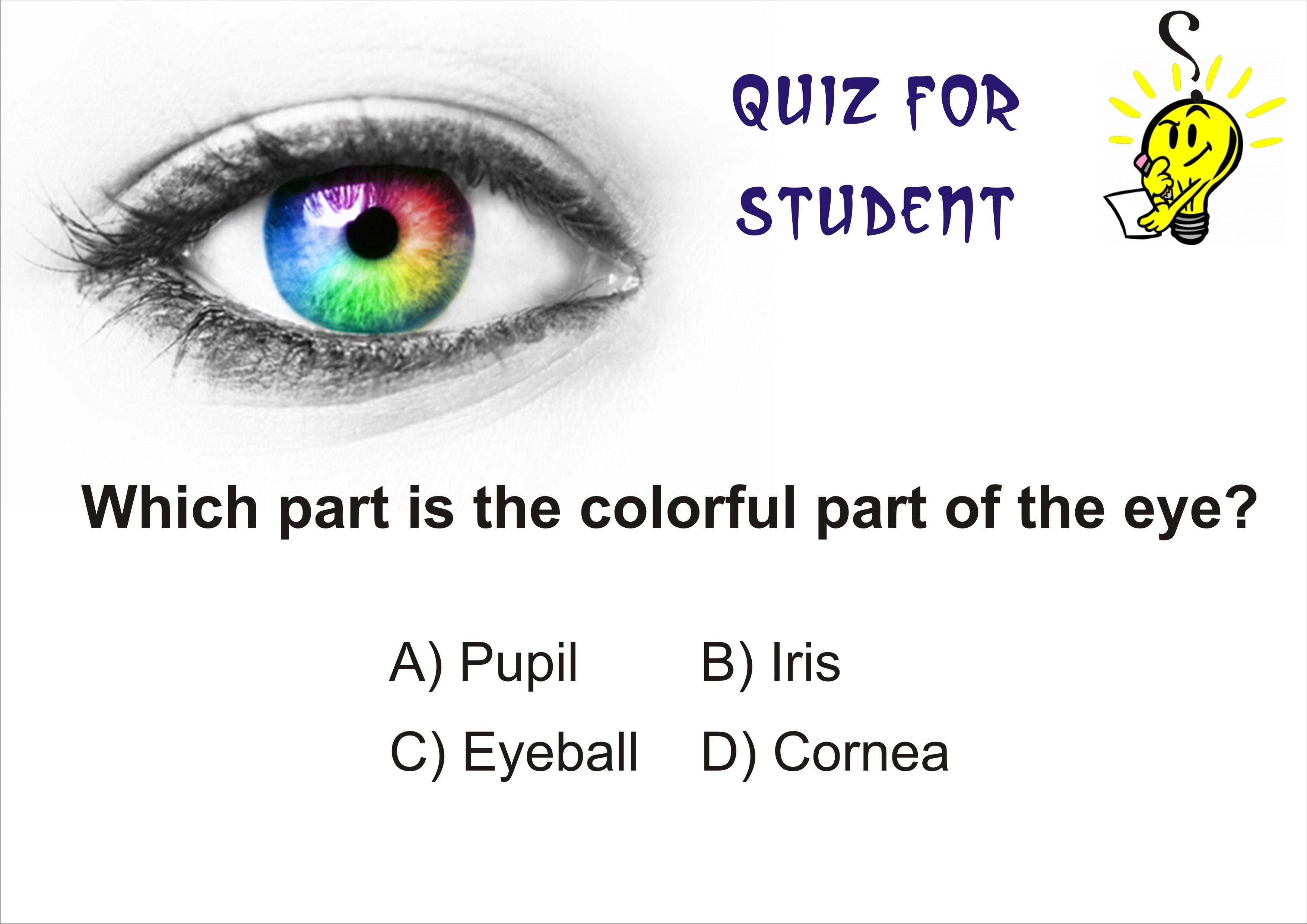 Very Easy General Knowledge Quiz Question General Quiz Eye