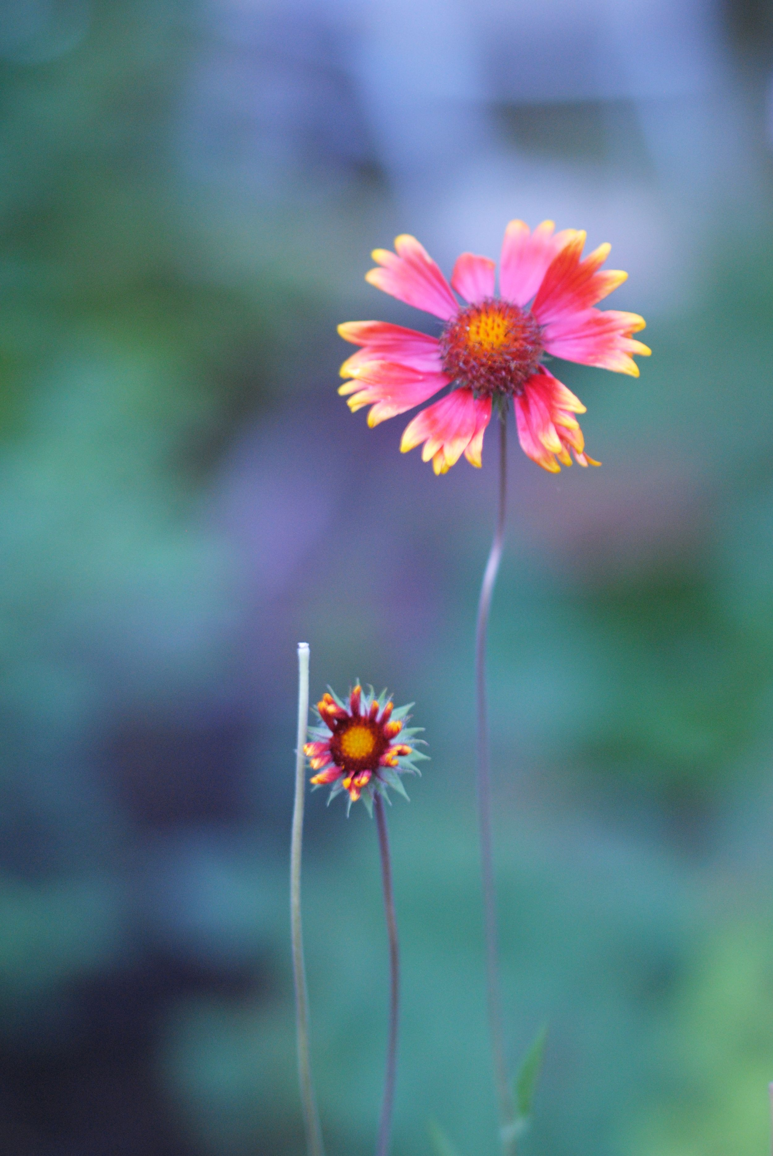 Last Summer Flowers Photography Pinterest Flowers Pretty