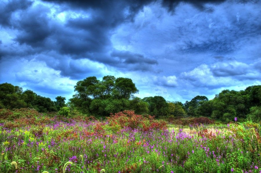 Floral Wetlands by Seth Dochter on 500px