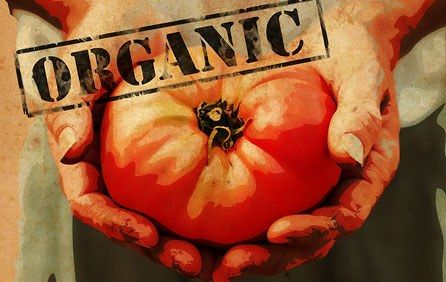 Organic Pest and Disease Control - Cyprus Gardener - information, tips and advice on growing organic produce in a Mediterranean climate