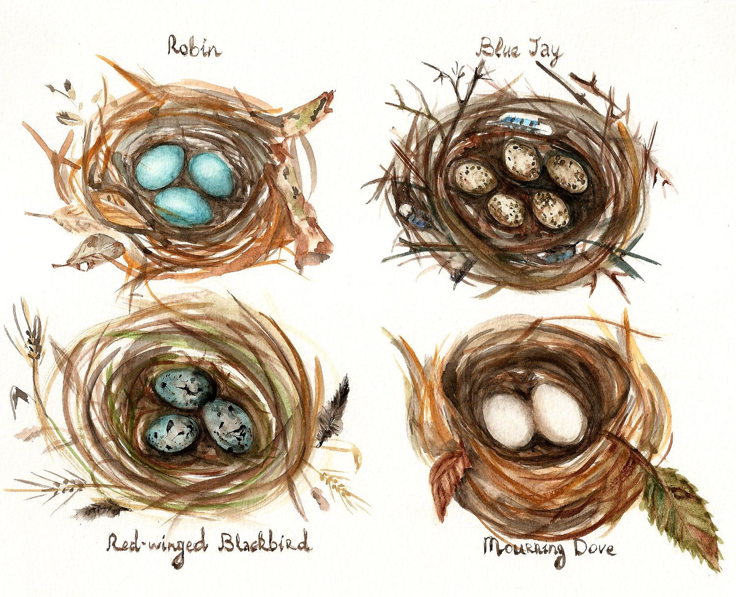 Drawing printout how to draw a bird nest - Bird Nests